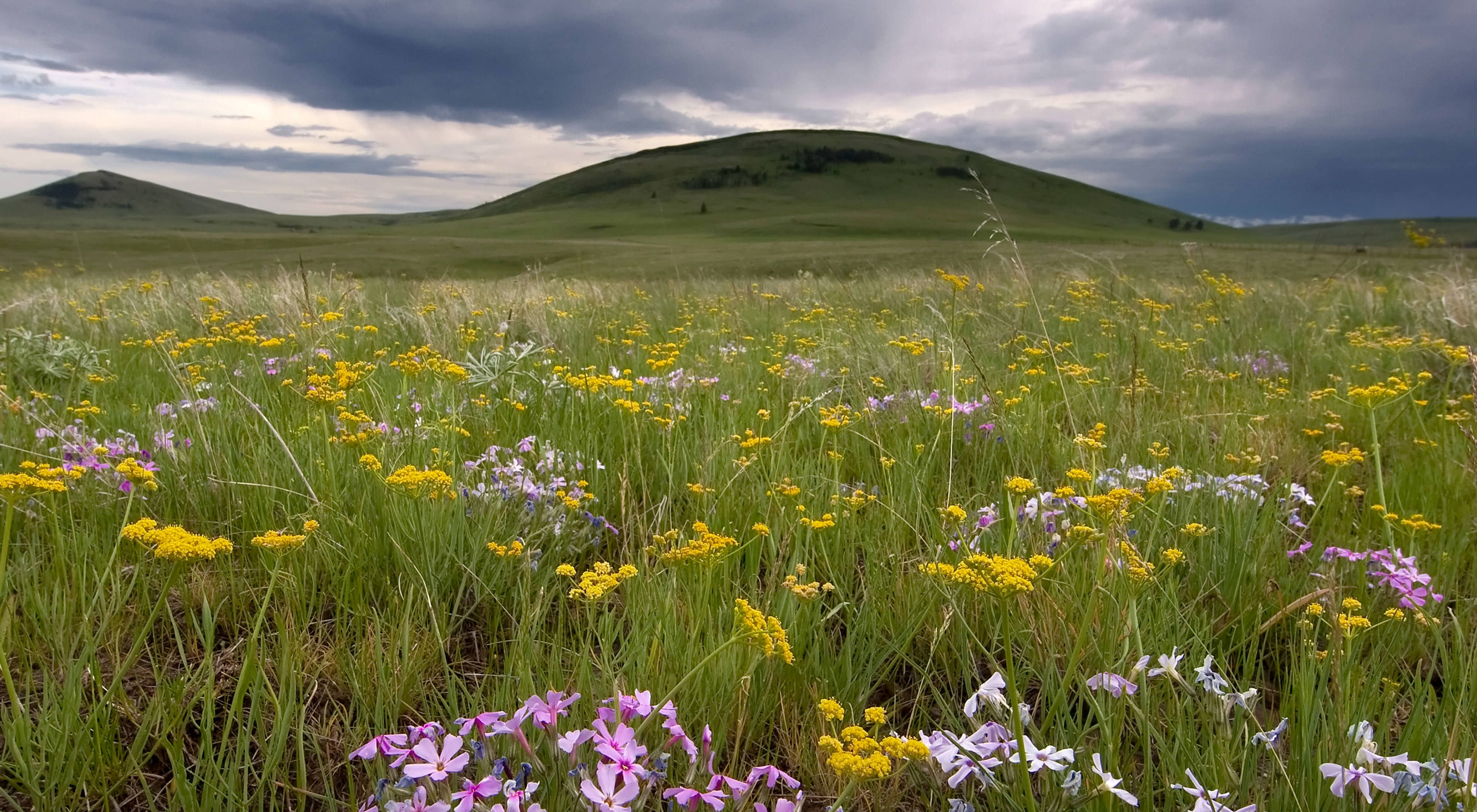 Zumwalt Prairie in Oregon's northeastern corner, is North America's largest remaining grassland of its type.