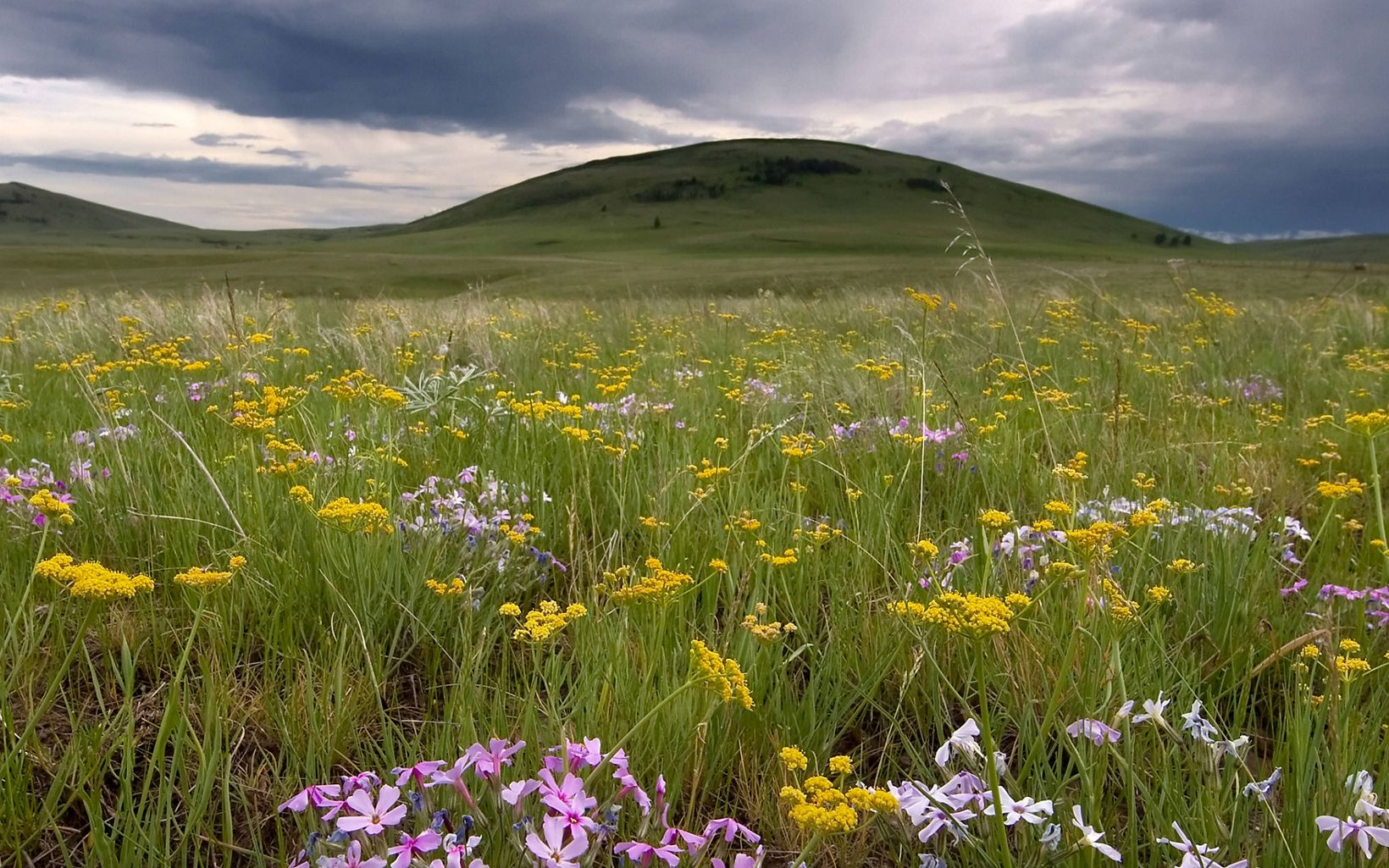 Wildflowers bloom at Zumwalt Prairie Preserve