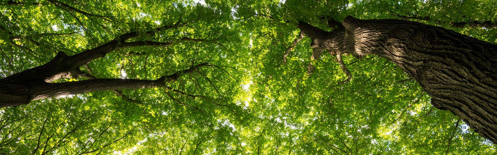 擁有超過550種植物,樹木和灌木,是鳥類和其他野生動物的重要棲息地。