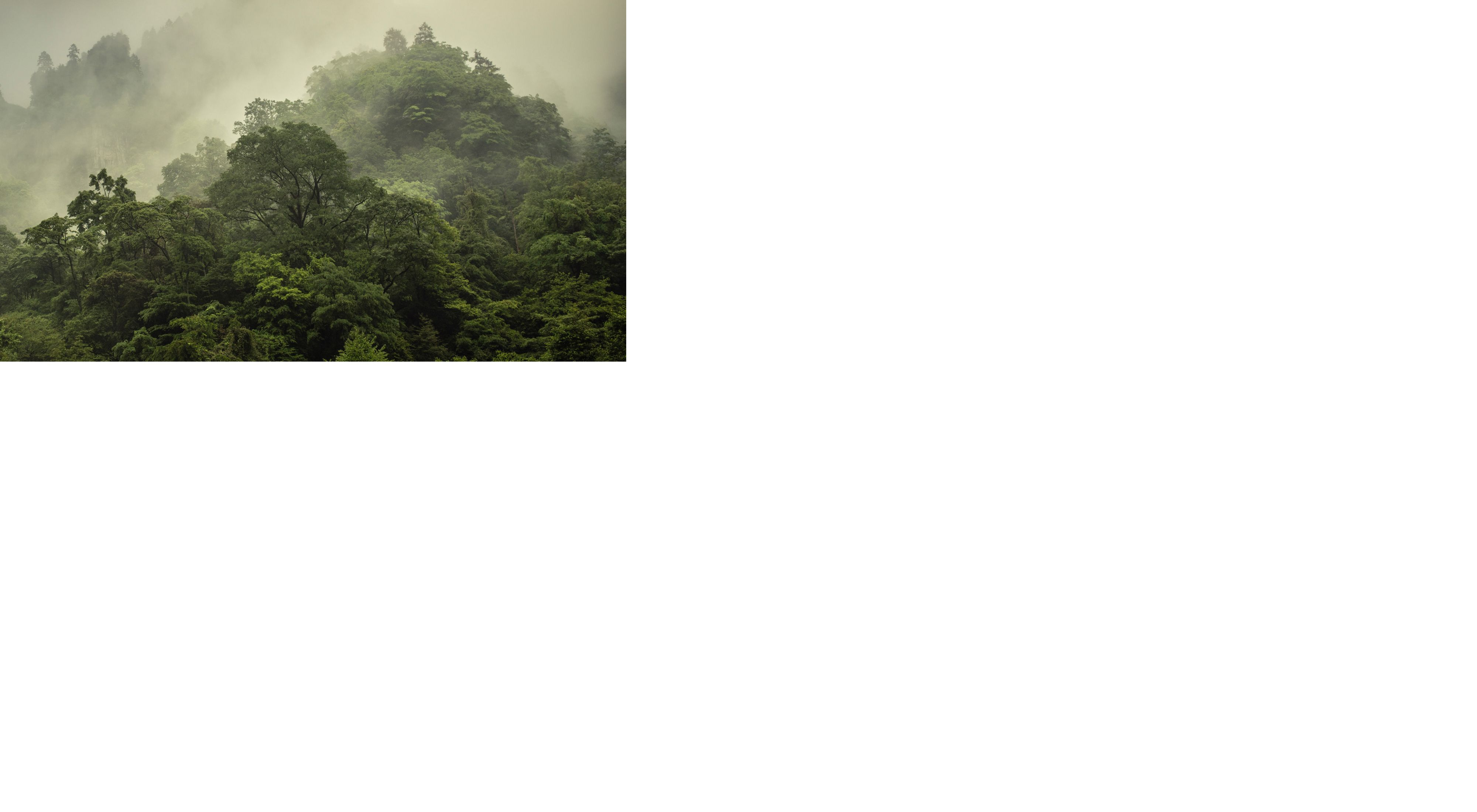 Misty mountain peaks of Laohegou Nature Reserve, Pingwu County, Sichuan Province, China.