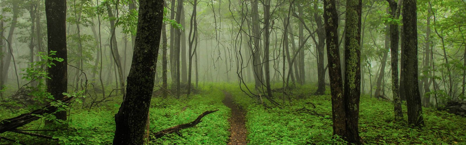 "This picture beautifully illustrates what is known as ""The Green Tunnel"" on the Appalachian Trail. On the morning of June 4th of 2015 I captured this image in Virginia while thru hiking the Appalachian Trail. The lush vegetation and whimsical fog embodied everything I love about nature. When I view this image I am temporarily transported back into the forest."