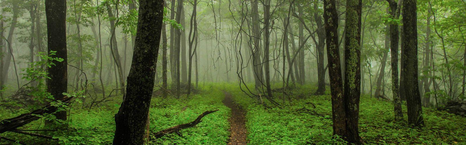 Sendero dentro de un bosque