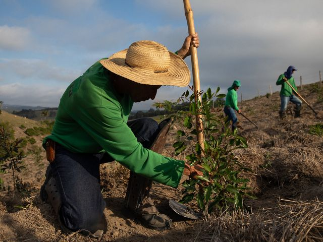 Planting of new reforestation areas in Extrema, Brazil